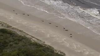 Θρήνος για τις εκατοντάδες νεκρές φάλαινες στην Τασμανία - Αγώνας δρόμου από τους διασώστες