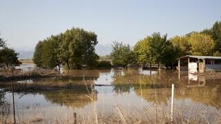 To CNN Greece στην Καρδίτσα: Μια μεγάλη λίμνη ο κάμπος - «Οργισμένοι οι πολίτες»