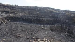 Πάρος: Πώς ξεκίνησε η μεγάλη φωτιά - Συγκλονιστικές εικόνες από το τοπίο σήμερα