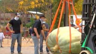 Ουισκόνσιν: Κολοκύθα για ρεκόρ Γκίνες στις ΗΠΑ - Ζυγίζει 907 κιλά