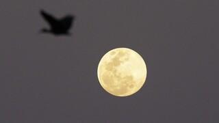 Διπλή πανσέληνος τον Οκτώβριο: Απόψε η πρώτη - Πότε έρχεται η «Μπλε Σελήνη»
