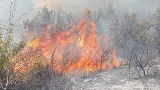 Μεγάλη φωτιά σε δασική έκταση στον Έβρο