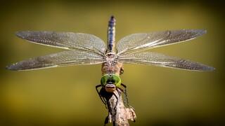 «Εισβολή» στην Ευρώπη: Έρχονται 2.500 νέα ξενικά είδη