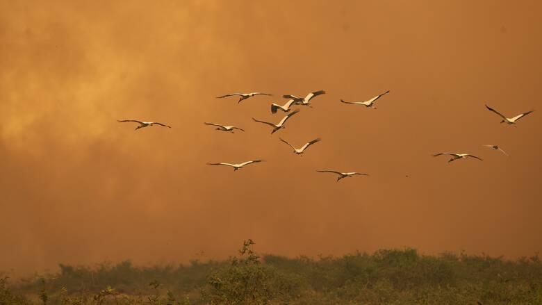 Βραζιλία: Κατά 13% αυξήθηκαν οι πυρκαγιές σε σχέση με πέρυσι
