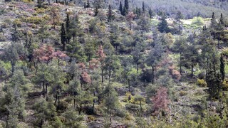 Παρέμβαση ΠΟΜΙΔΑ στο ΣτΕ για την αναμόρφωση των δασικών χαρτών