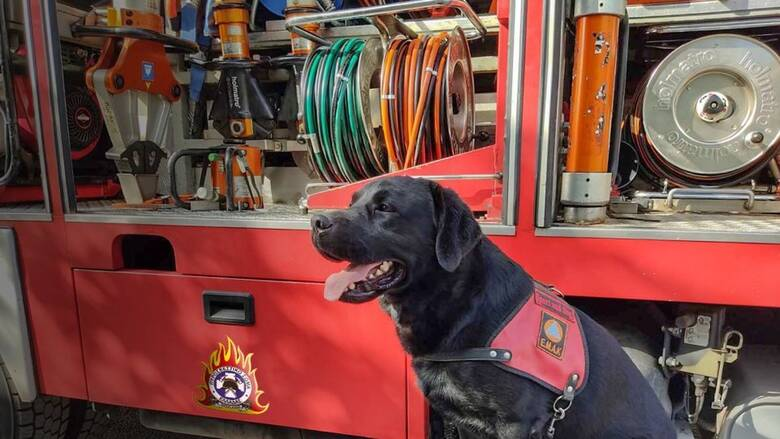 Η τρυφερή ανάρτηση της Πυροσβεστικής για τη σημερινή Παγκόσμια Ημέρα των Ζώων