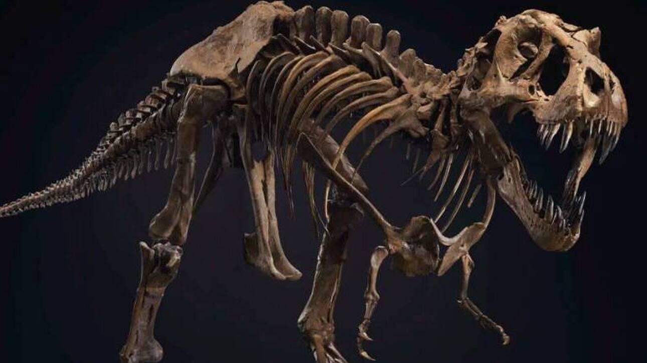 Σκελετός Τυραννόσαυρου πουλήθηκε σε δημοπρασία για 31,8 εκατομμύρια δολάρια (vid)