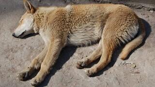 Σε κακούργημα μετατρέπεται το αδίκημα του βασανισμού ζώων