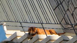 Άρειος Πάγος: Αυτόφωρο και σύλληψη για την κακοποίηση ζώων