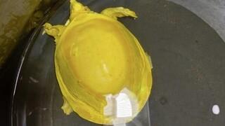 Κίτρινη χελώνα - αλμπίνος βρέθηκε στην Ινδία
