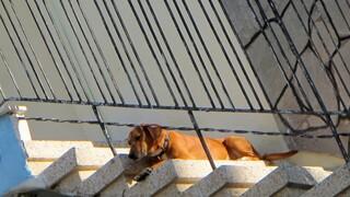 Στη Βουλή η τροπολογία για την αυστηροποίηση ποινών όσων κακομεταχειρίζονται ζώα