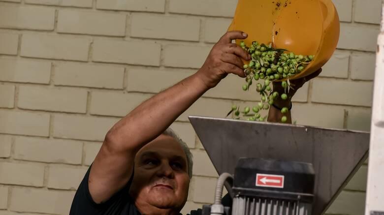 Κορωνοϊός - lockdown: Ειδική μέριμνα για τους ελαιοπαραγωγούς