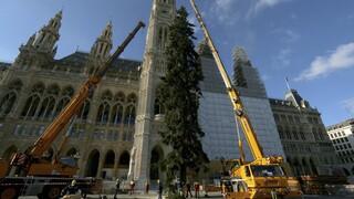 Αυστρία: Δύο τεράστια χριστουγεννιάτικα δέντρα θα προσπαθήσουν να φέρουν ελπίδα στους Βιεννέζους