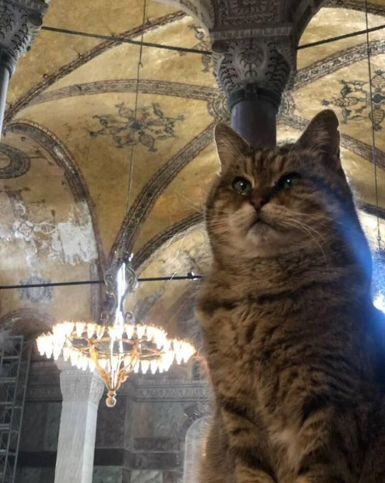 https://cdn.cnngreece.gr/media/news/2020/11/08/241810/photos/snapshot/hagia-sophia-cat1.jpg