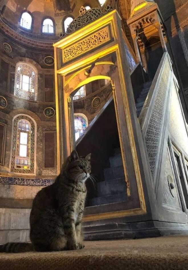 https://cdn.cnngreece.gr/media/news/2020/11/08/241810/photos/snapshot/hagia-sophia-cat4.jpg