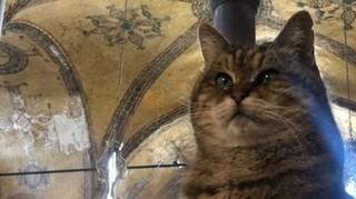Τουρκία: Πέθανε η Γκλι, η γάτα της Αγίας Σοφίας