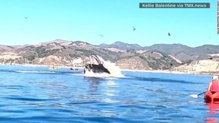 Βίντεο που «κόβει» την ανάσα: Φάλαινα παραλίγο να... καταπιεί δύο γυναίκες που έκαναν κανό