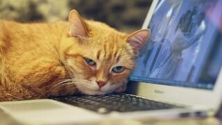 Ερευνητές εξηγούν γιατί οι γάτες αγαπούν τα πληκτρολόγια