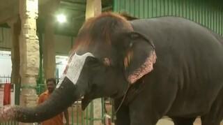 Ινδία: Ελέφαντας παίζει φυσαρμόνικα και εντυπωσιάζει με το εντυπωσιακό του... κούρεμα