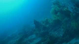 Σπουδαία ανακάλυψη: Εντοπίστηκαν νέα είδη ζώων στα βάθη του Ινδικού Ωκεανού