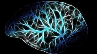 Αμερικανοί επιστήμονες: Στον ανθρώπινο εγκέφαλο υπάρχουν κύτταρα για το πέρασμα του χρόνου