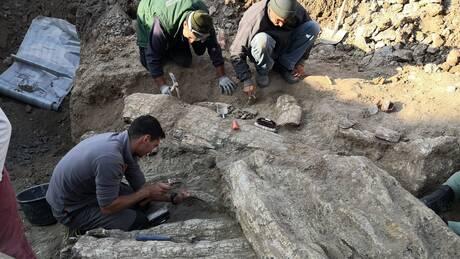 Μυτιλήνη: Δέντρα 18 εκατομμυρίων ετών ήρθαν στο φως στο Απολιθωμένο Δάσος