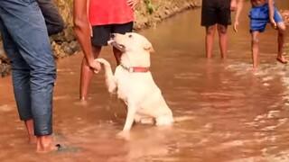Καίσαρας: Αυτός ο σκύλος είναι κορυφαίος παίκτης του... βόλεϊ