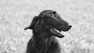 Ηράκλειο: Πυροβόλησαν σκύλο – Έχει ακρωτηριαστεί το ένα του πόδι