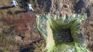 Κορωνοϊός: Θανατώθηκαν 1.800 βιζόν στη φάρμα Βοΐου