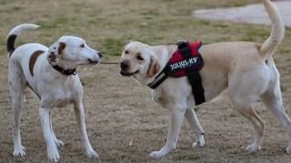 Κορωνοϊός: Δεν τον μεταδίδουν τα κατοικίδια - Τι διευκρινίζει κτηνίατρος