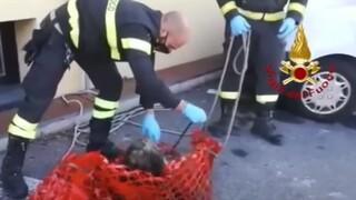 Ιταλία: Διάσωση τυφλού σκύλου από πυροσβέστες