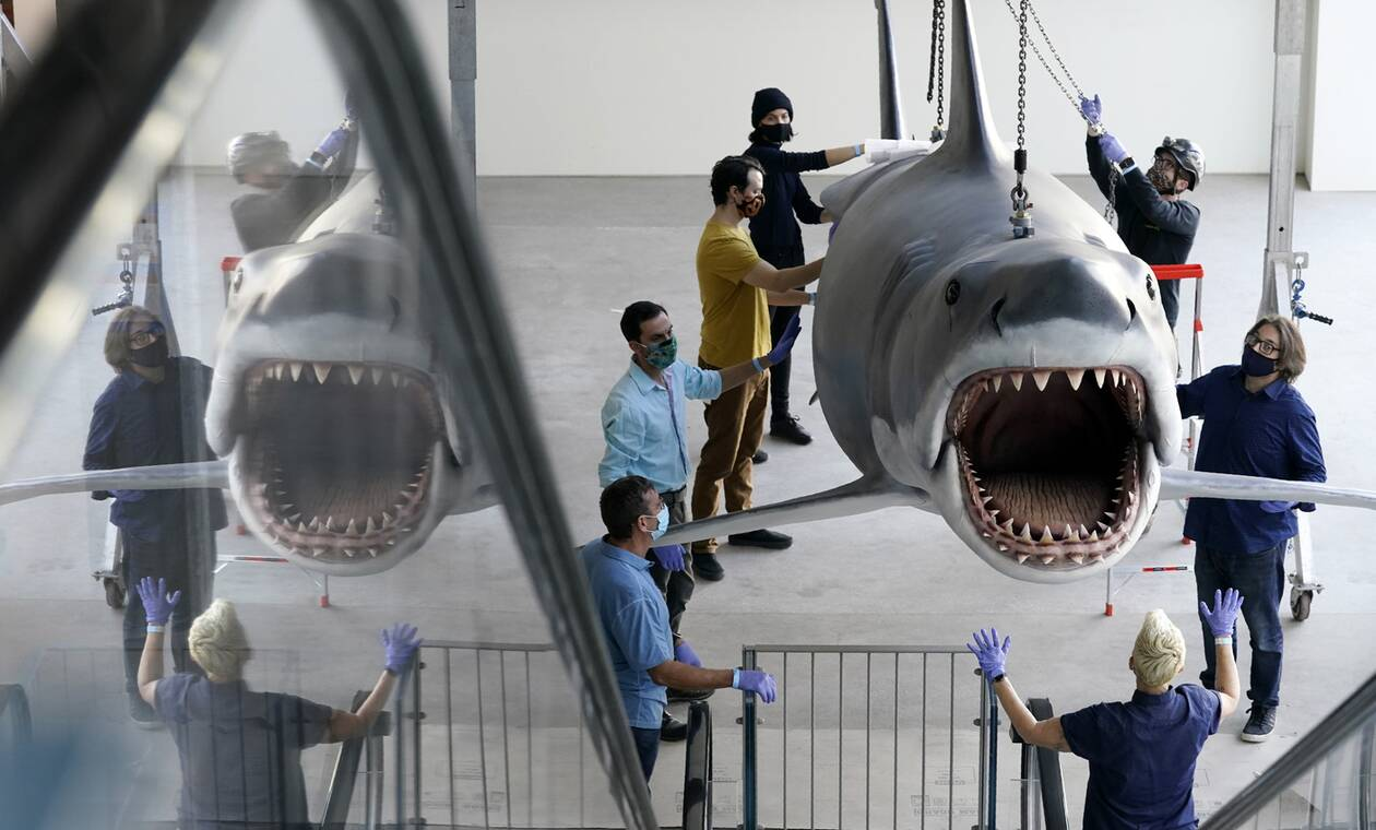 https://cdn.cnngreece.gr/media/news/2020/11/24/244089/photos/snapshot/Shark1.jpg