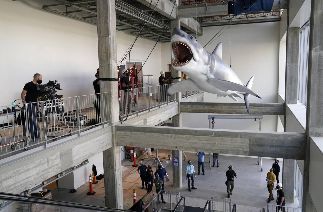 https://cdn.cnngreece.gr/media/news/2020/11/24/244089/photos/snapshot/Shark3.jpg