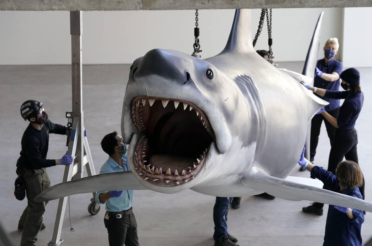 https://cdn.cnngreece.gr/media/news/2020/11/24/244089/photos/snapshot/Shark4.jpg
