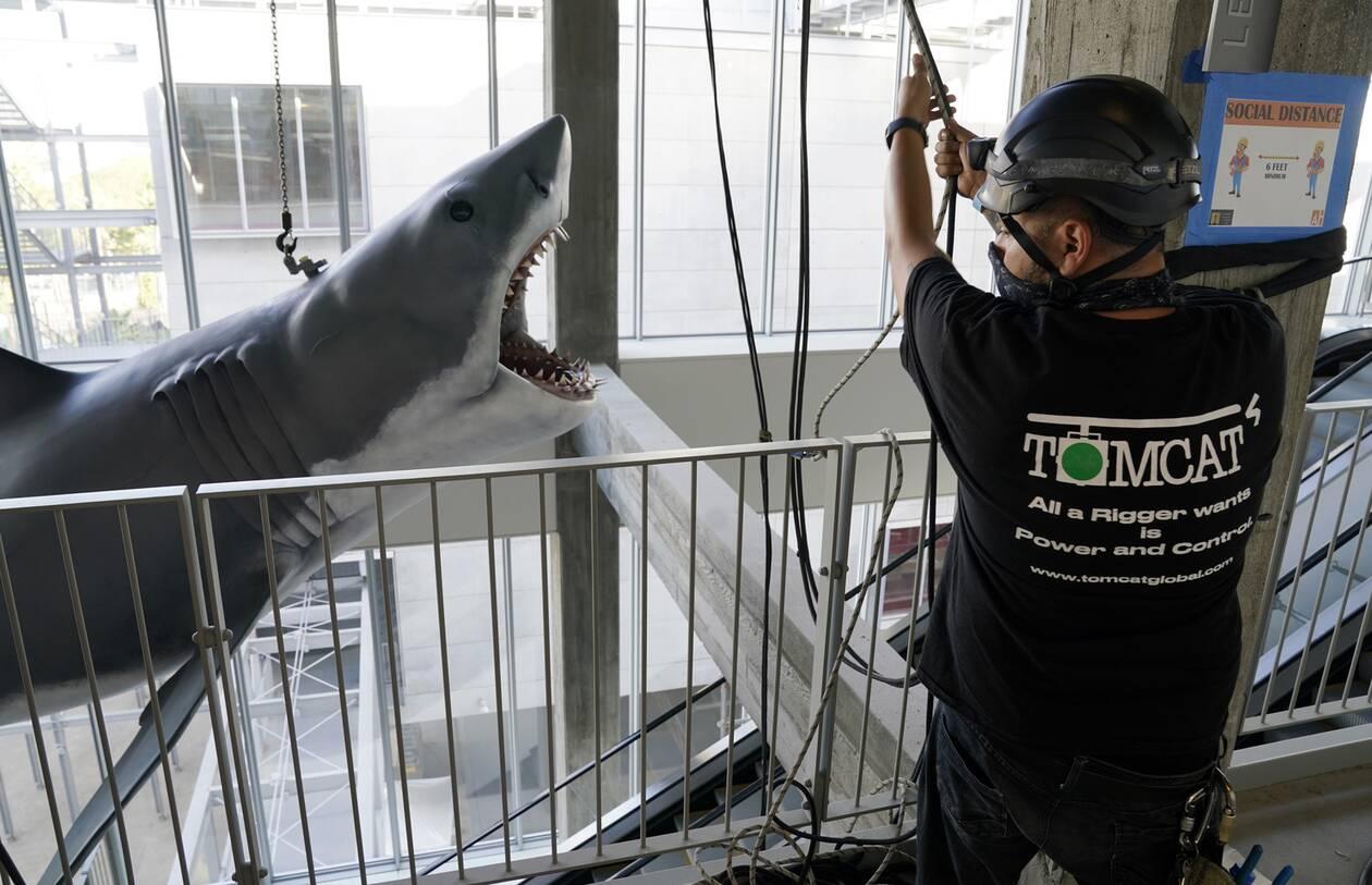 https://cdn.cnngreece.gr/media/news/2020/11/24/244089/photos/snapshot/Shark5.jpg