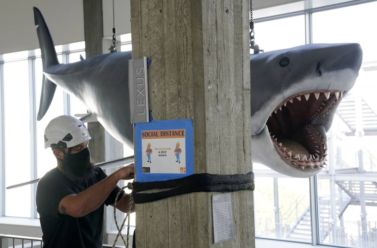 https://cdn.cnngreece.gr/media/news/2020/11/24/244089/photos/snapshot/Shark6.jpg