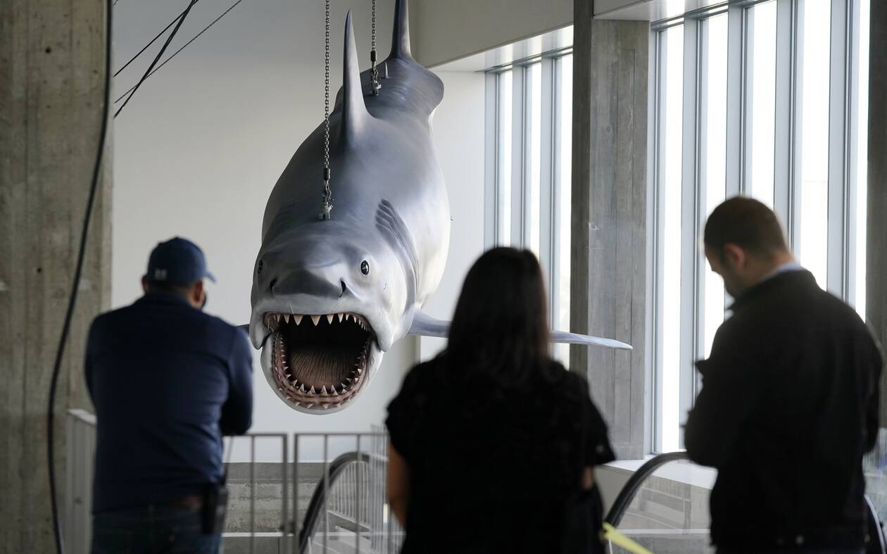 https://cdn.cnngreece.gr/media/news/2020/11/24/244089/photos/snapshot/Shark7.jpg