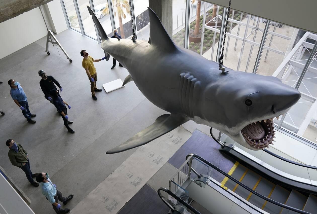 https://cdn.cnngreece.gr/media/news/2020/11/24/244089/photos/snapshot/Shark8.jpg