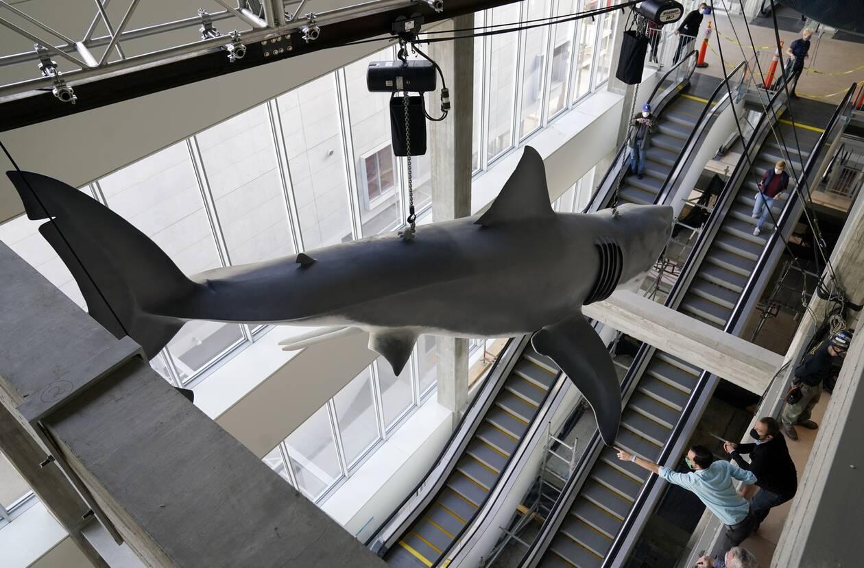 https://cdn.cnngreece.gr/media/news/2020/11/24/244089/photos/snapshot/Shark9.jpg