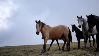 Θεσπίζεται για πρώτη φορά διαβατήριο για τα ιπποειδή