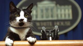Οι γάτες επιστρέφουν στον Λευκό Οίκο με την οικογένεια Μπάιντεν