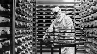 Κορωνοϊός: Πήρε έγκριση στη Βρετανία το εμβόλιο των Pfizer/BioNTech