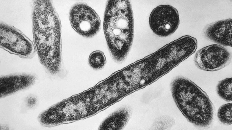 Η ανθεκτικότητα των μικροβίων στα φάρμακα σκοτώνει