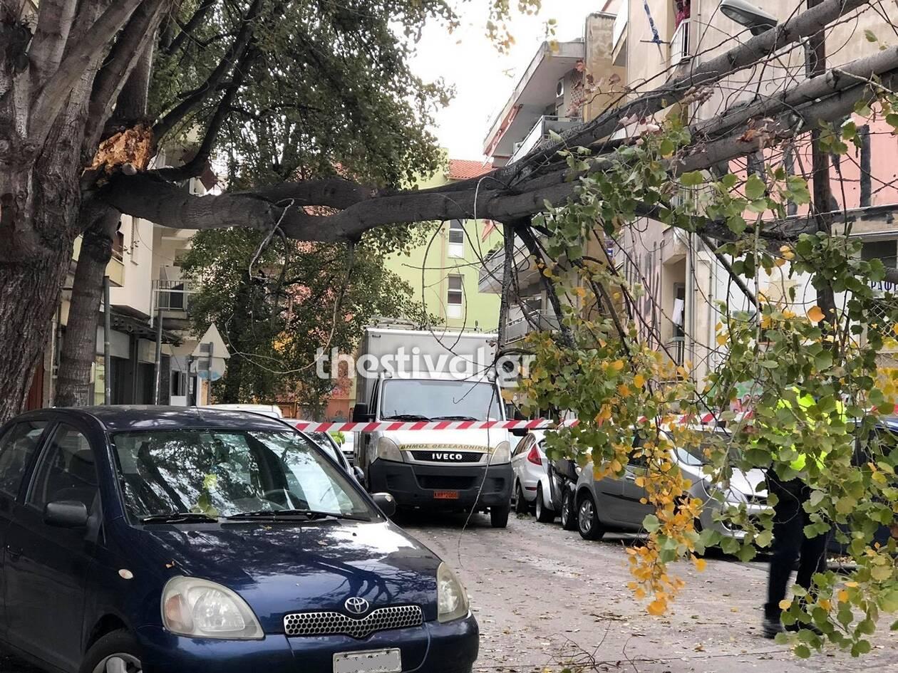 https://cdn.cnngreece.gr/media/news/2020/12/07/245941/photos/snapshot/thessaloniki-dentra1.jpg