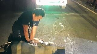 Ταϊλάνδη: Άνδρας έσωσε ελεφαντάκι προσφέροντάς του πρώτες βοήθειες μετά από ατύχημα