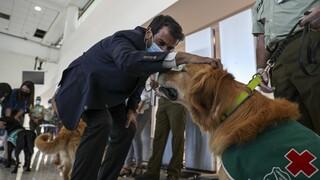 Χιλή: Ομάδα... σκύλων ανέλαβε δράση στο αεροδρόμιο - Εντοπίζουν κρούσματα κορωνοϊού