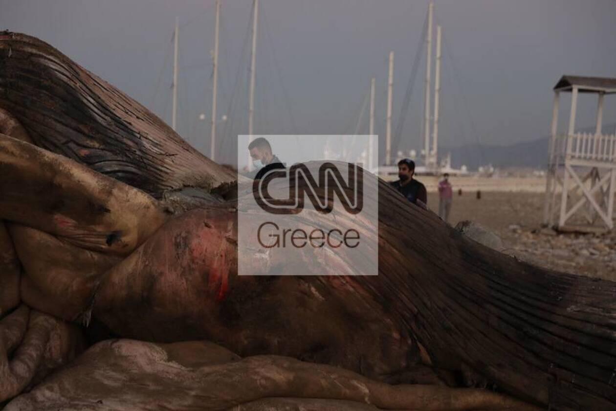https://cdn.cnngreece.gr/media/news/2020/12/24/248133/photos/snapshot/5fe3670c42aae.jpg