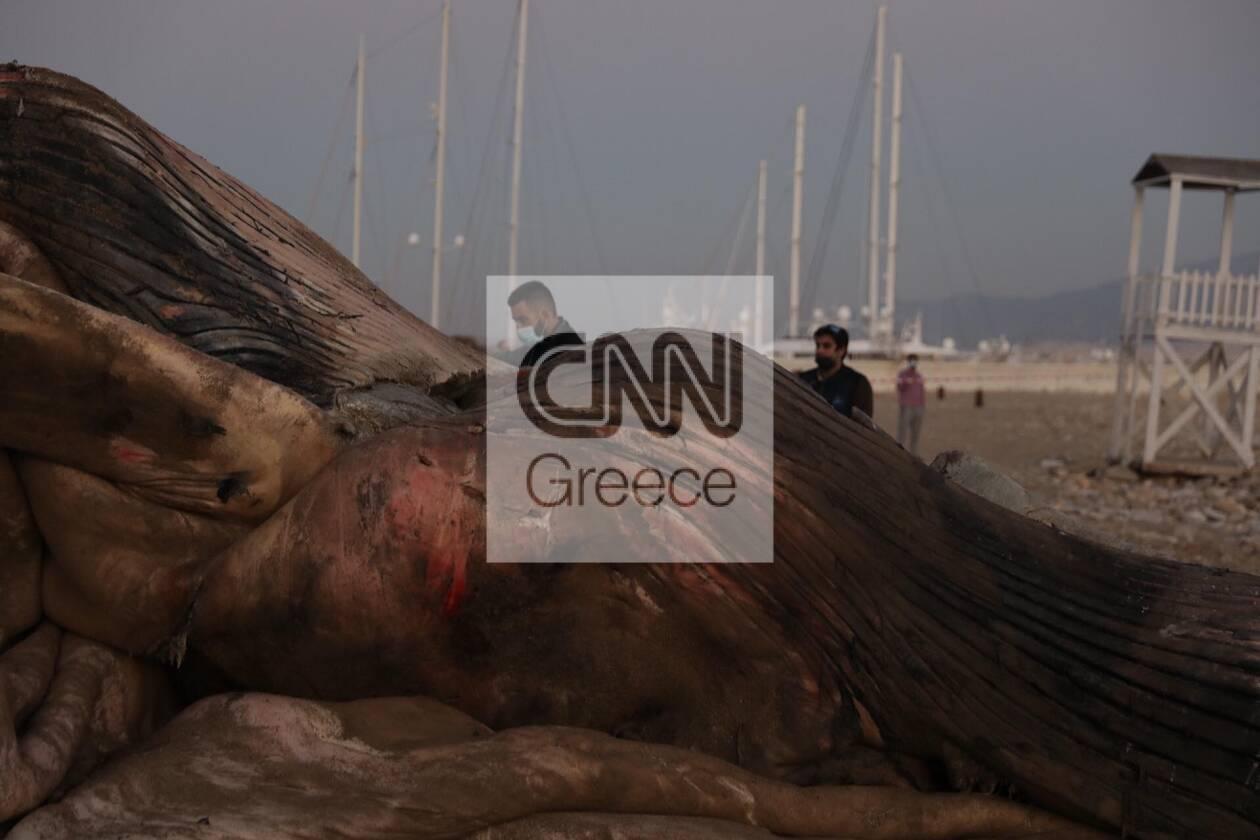 https://cdn.cnngreece.gr/media/news/2020/12/24/248133/photos/snapshot/falaina-peiraias-10.jpg