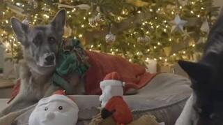 Οι σκύλοι της οικογένειας Μπάιντεν στέλνουν ευχές για Καλά Χριστούγεννα
