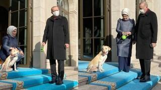 Λεμπλεμπί ή αλλιώς… στραγάλι: Επιστρατεύουν τη σύζυγο Ερντογάν και τον σκύλο που υιοθέτησε